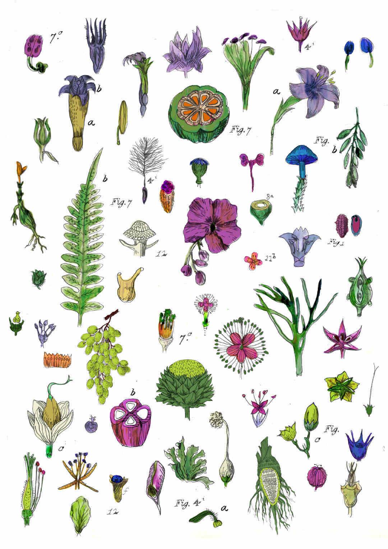 植物花卉果实矢量图源文件-POP花型网