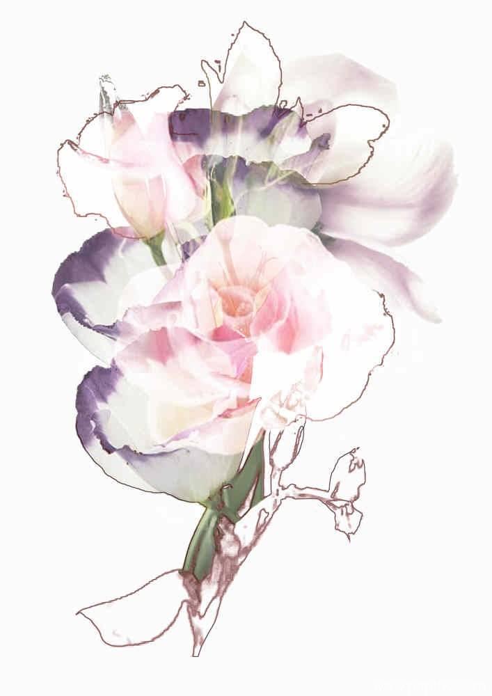 粉色洁白玫瑰花矢量图-POP花型网