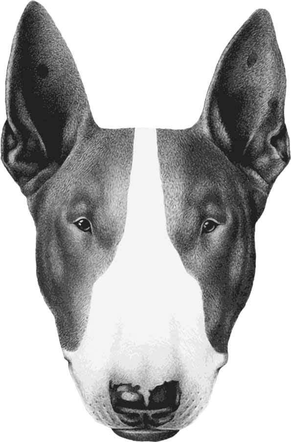 动物小狗头像印花矢量图服装裁片T恤烫图印花花型素材-POP花型网