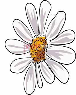 潮牌小邹菊印花图案服装裁片T恤卫衣烫图印花花型素材-POP花型网